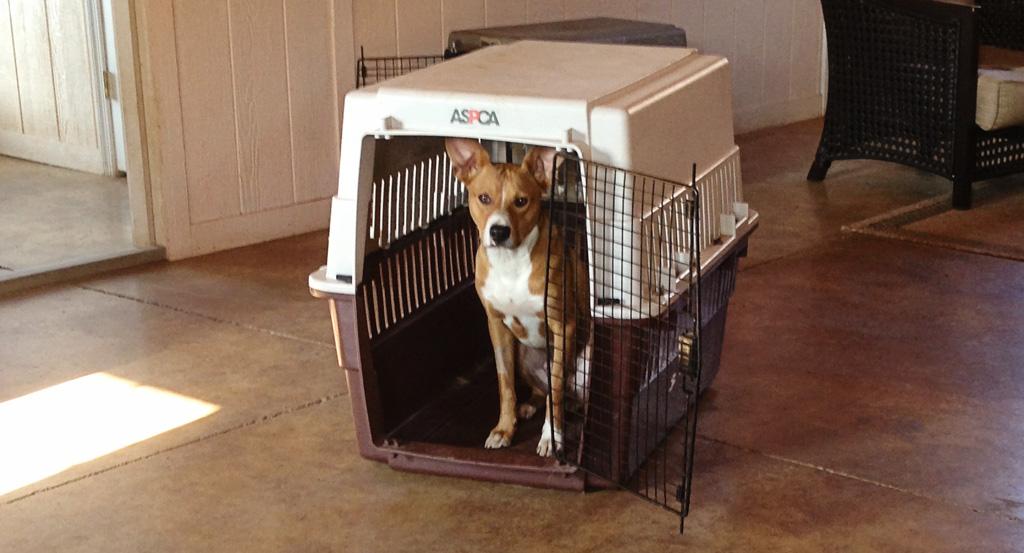 Is Crate Training Cruel? | Kindred Spirits Dog Training